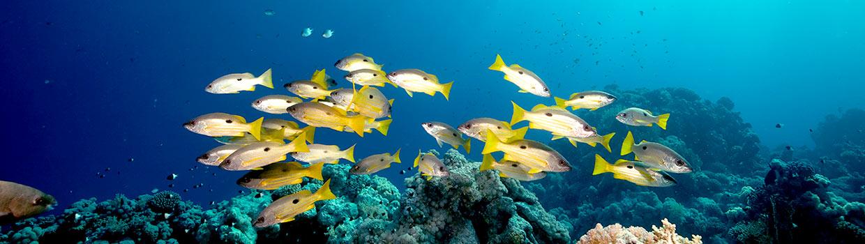 Nippi header - school of ocean fish