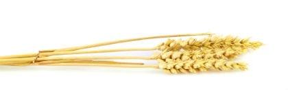 JRS Wheat Fiber