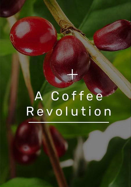 Coffee fruit plant